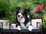 5 Tips to Help Calm Your Dog During Thunderstorms