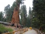 Fires Shut Sequoia National Park, Could Threaten Huge Trees